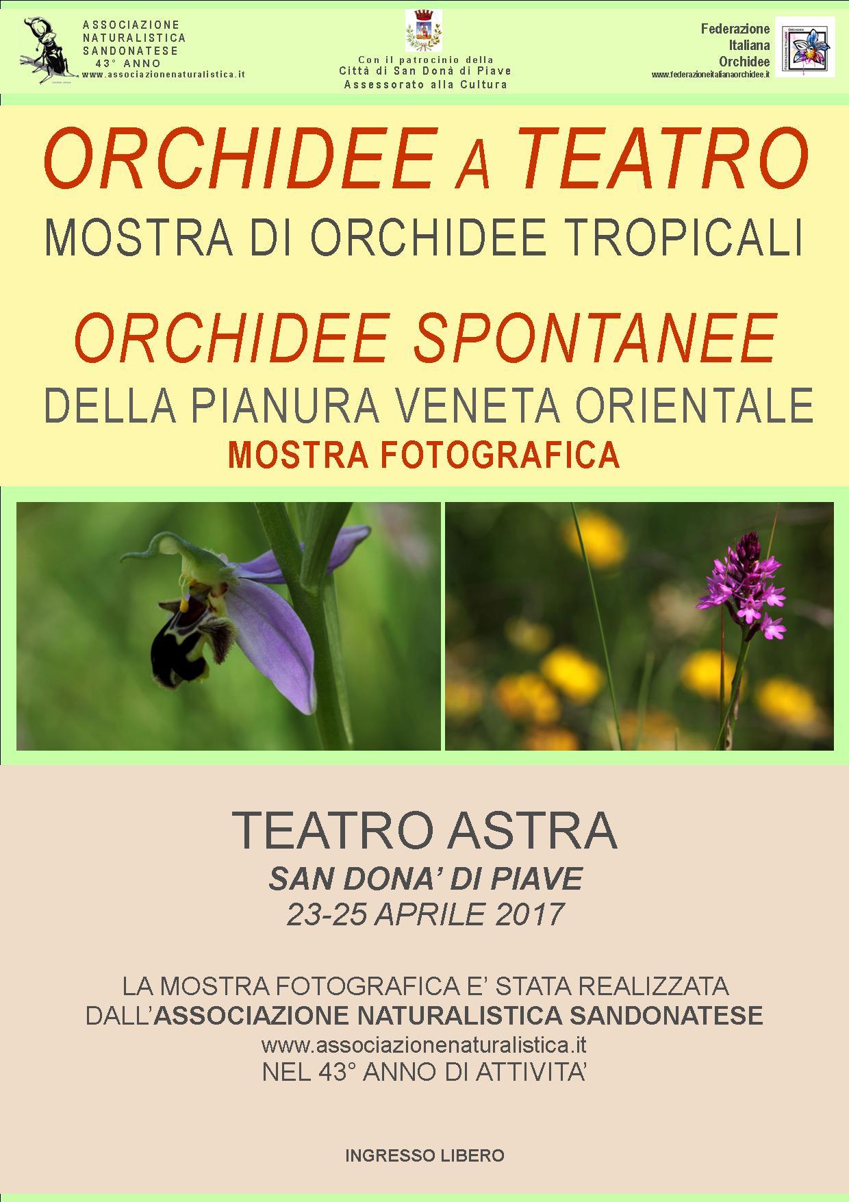 mostra fotografico-naturalistica sulle ORCHIDEE SPONTANEE DELLA PIANURA VENETA ORIENTALE