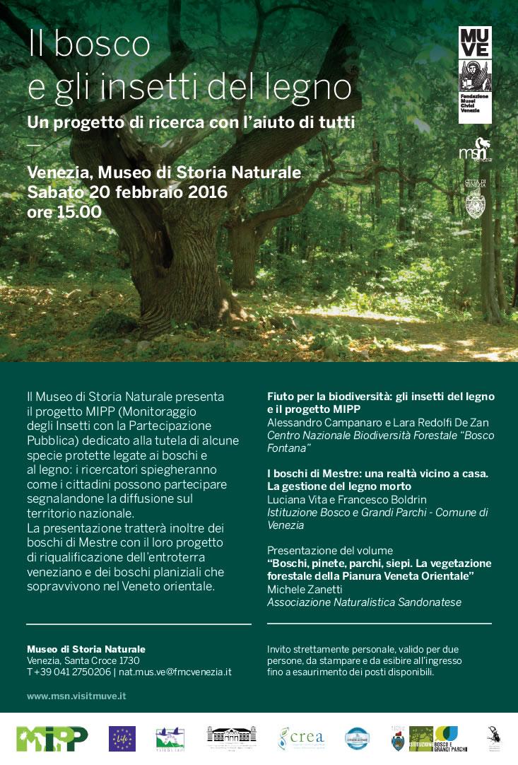 il bosco e gli insetti del legno museo di storia naturale venezia