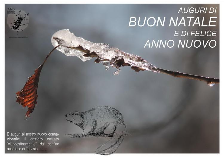 AUGURI DI BUON NATALE DALL'ASSOCIAZIONE NATURALISTICA SANDONATESE di Michele Zanetti